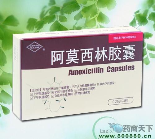 阿莫西林胶囊网络招商